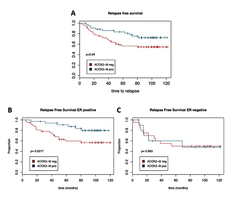 Figure 5. ACOX2-i9 expression is associated with good prognosis in a cohort of breast cancer patients. Kaplan-Meier survival curves of patients from the MicMa cohort testing positive (n = 44) or negative (n = 62) for ACOX2-i9 by PCR assay (a). b and c show survival curves for ER positive (ACOX2-i9pos n = 33, ACOX2-i9neg n = 42) and ER negative patients (ACOX2-i9pos n = 11, ACOX2-i9neg n = 20) respectively.