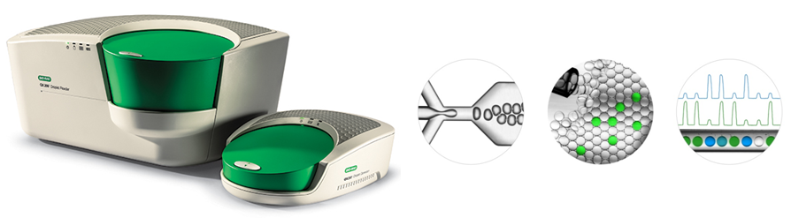 The droplet digital PCR (ddPCR) platform from BioRad. With the ddPCR platform from BioRad, a PCR mixture is randomly divided into ~20,000 nanoliter-scale droplets formed by water-in-oil emulsion. Individual PCRs are performed inside each droplet, and based on the fraction of fluorescence-positive droplets, i.e. containing the target, absolute target quantification can be performed.