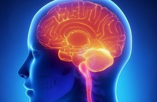 hjerne og mat