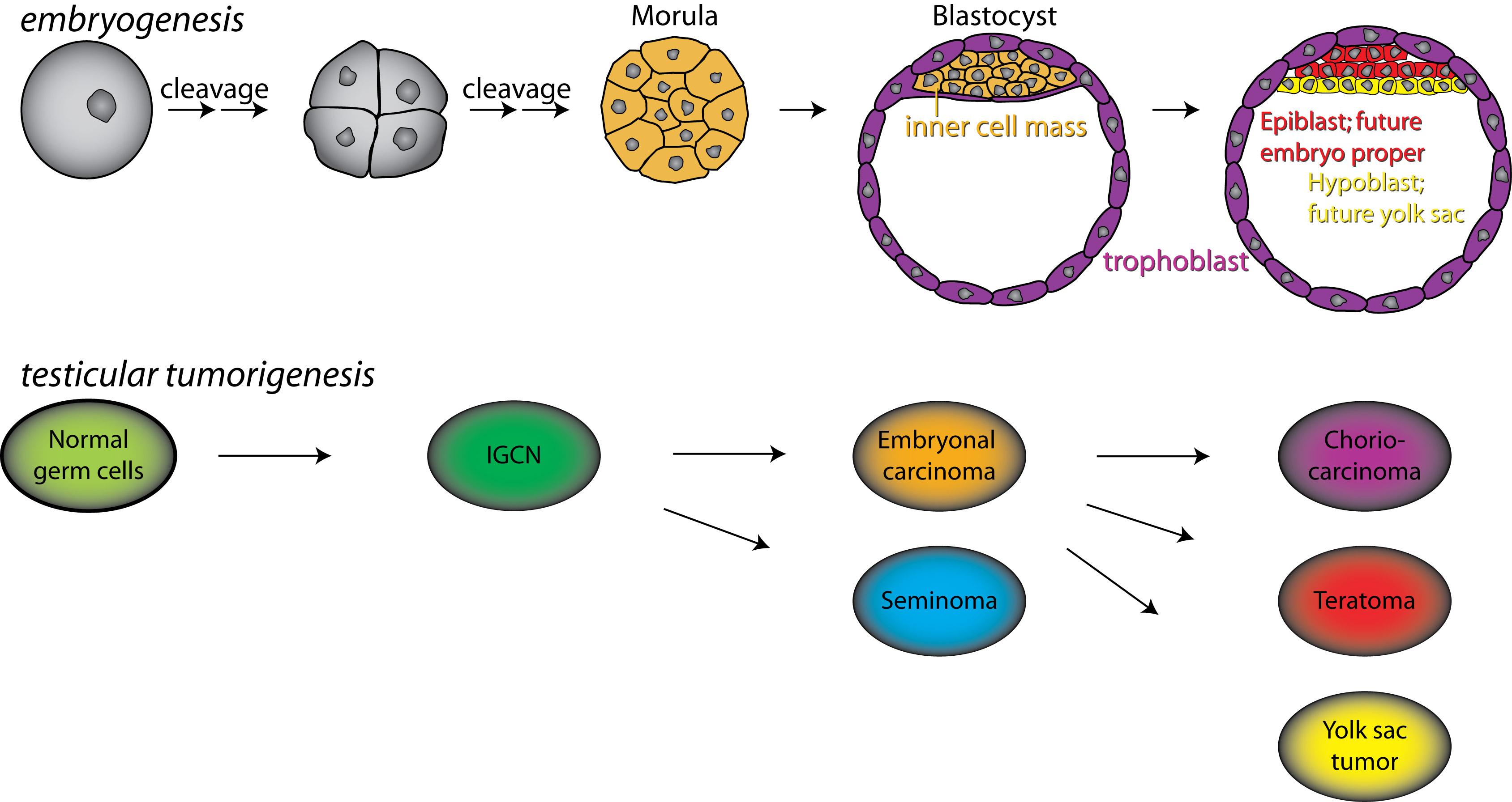 Rolf I. Skotheim's group - Dept. of Molecular Oncology ... - photo#46