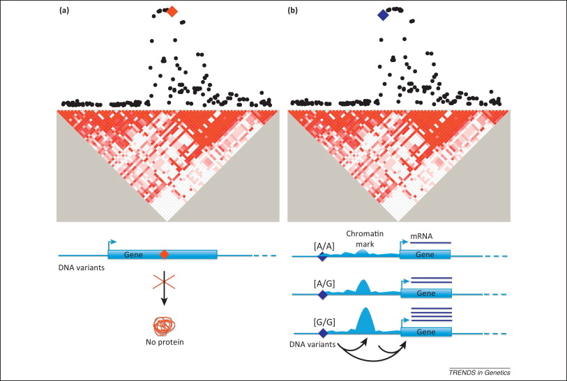 Genomic studies