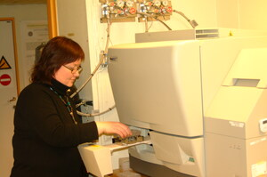 Karen-Marie Heintz in action at the MegBace injecting samples for SNP screening