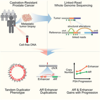 Graphical abstract and summary of the study published in Cell